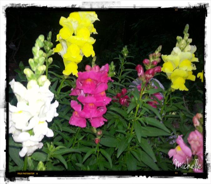 colourful1