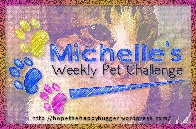 http://hopethehappyhugger.files.wordpress.com/2013/09/petchallenge.jpg