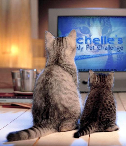 PetchallengeTV