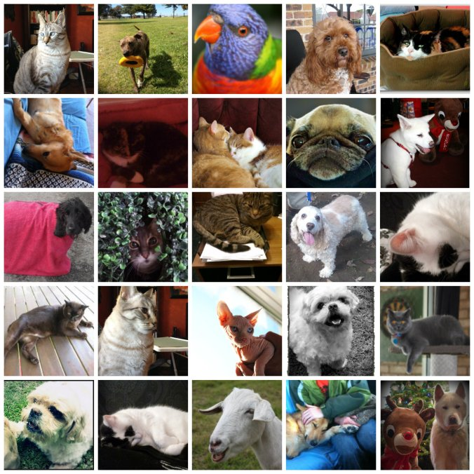 Petcollage09