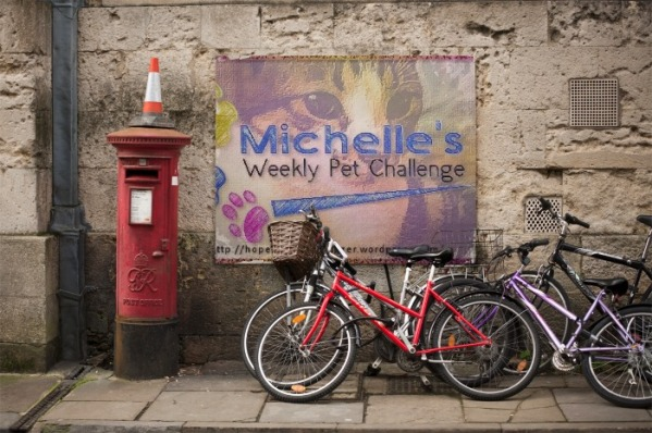 PhotoFunia Bycicle Regular 2013-12-24 09 19 15