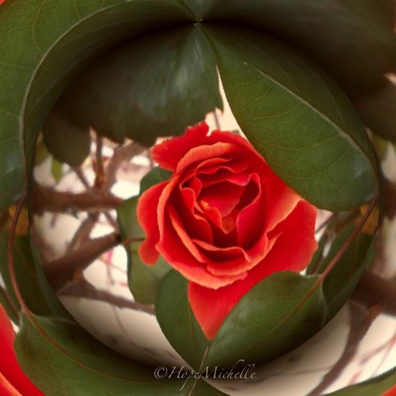 Circular rose-imp