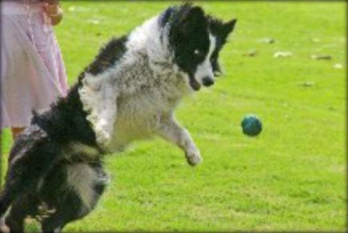 Dogballlarge