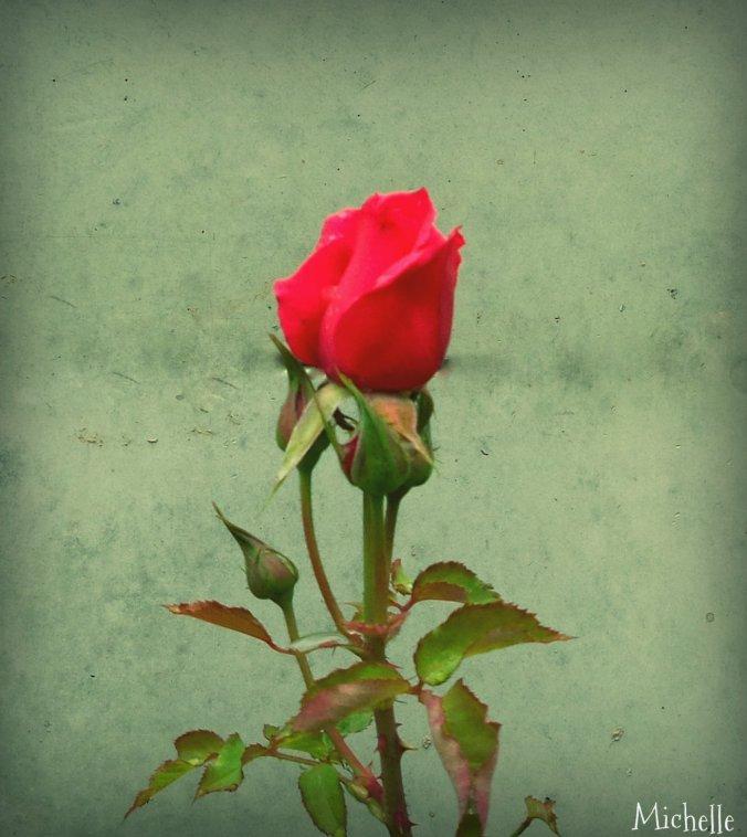 Rosebeg1