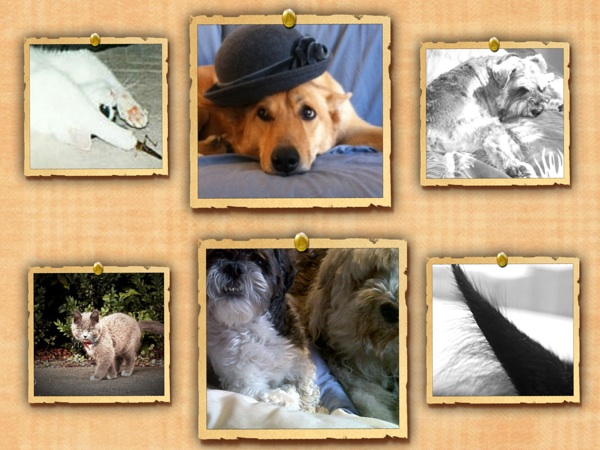 CollageImagepet1