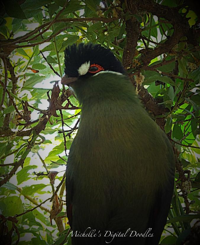 BirdGr