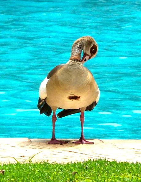 Ducksun