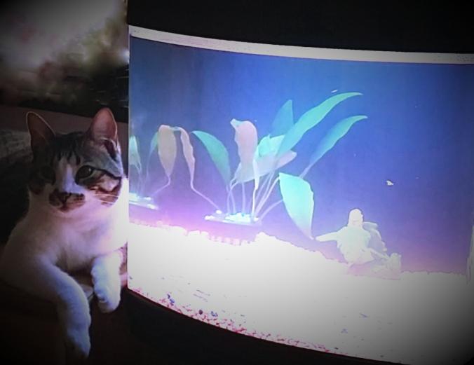 Kittyfish