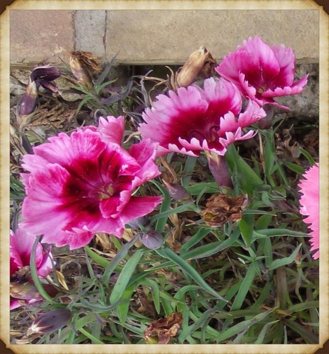 flowerframed