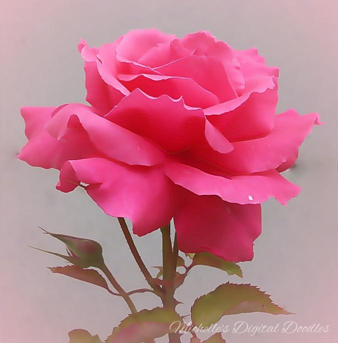 RoseWS