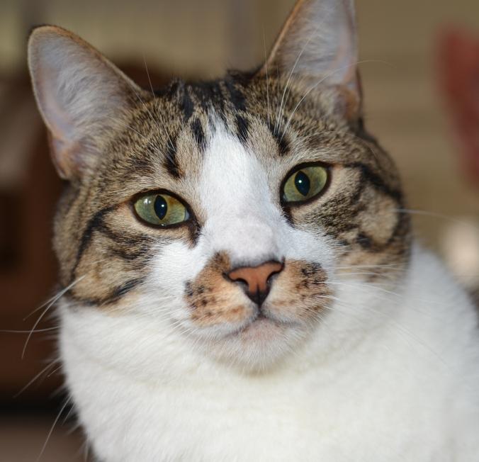 Precious kitty-p