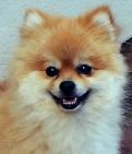 Smiley-p