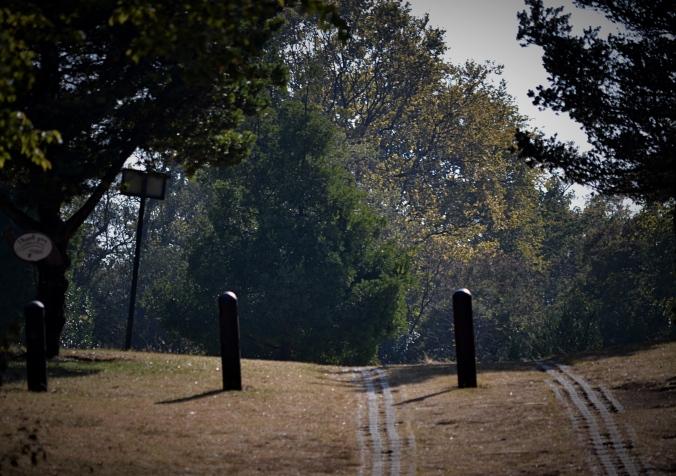 Botanic Gardens-p