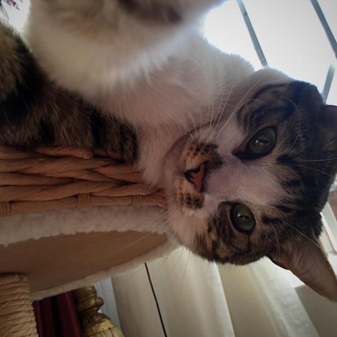 Playful Selfie