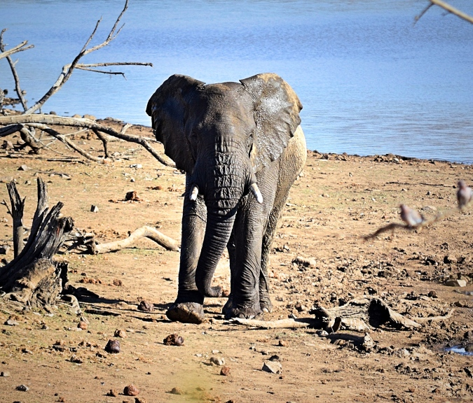 pilansburg-elephant